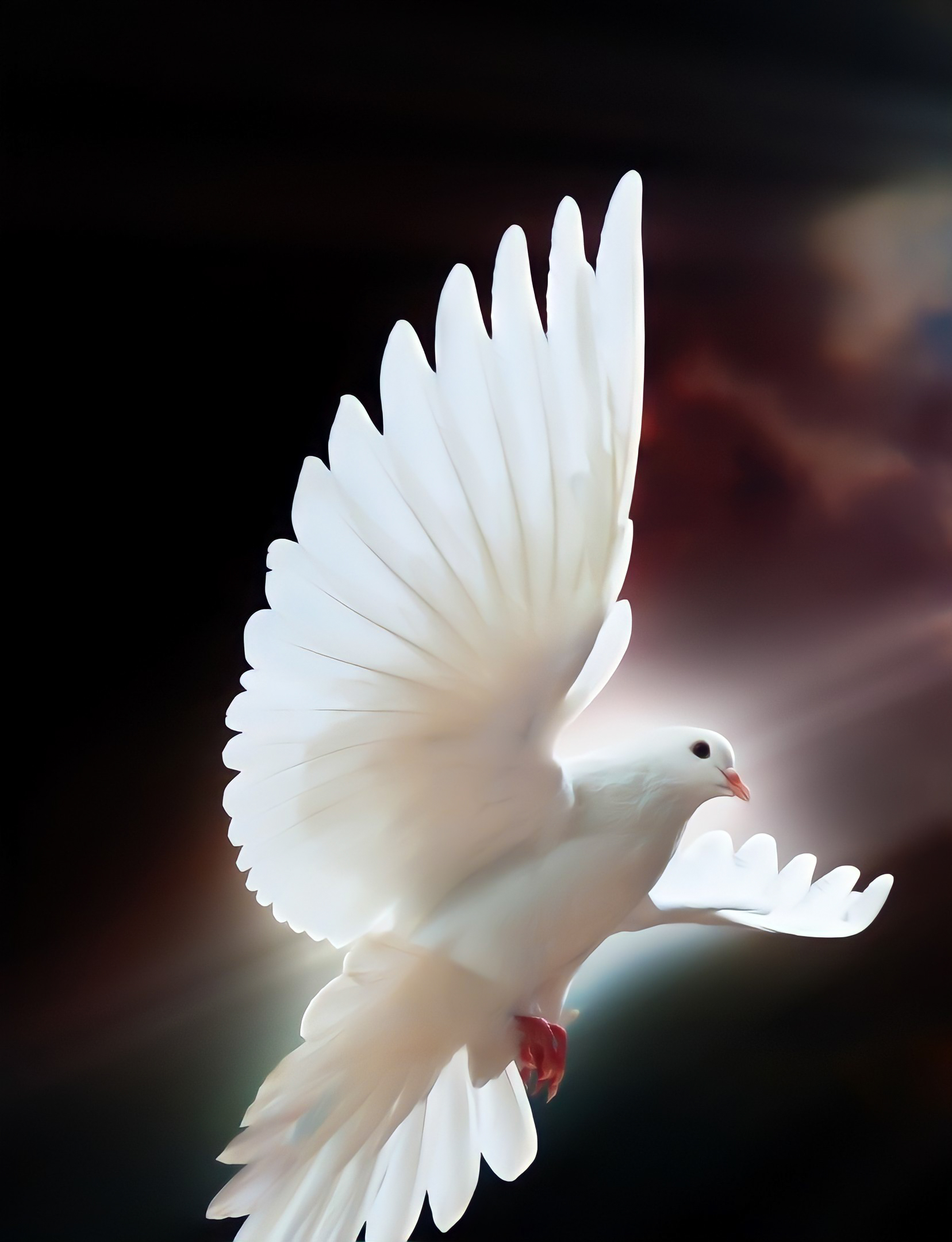 Holy Spirit / Dove / Pigeon